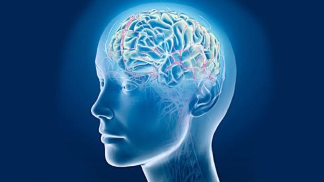 (ru) Головной мозг больше у добрых людей